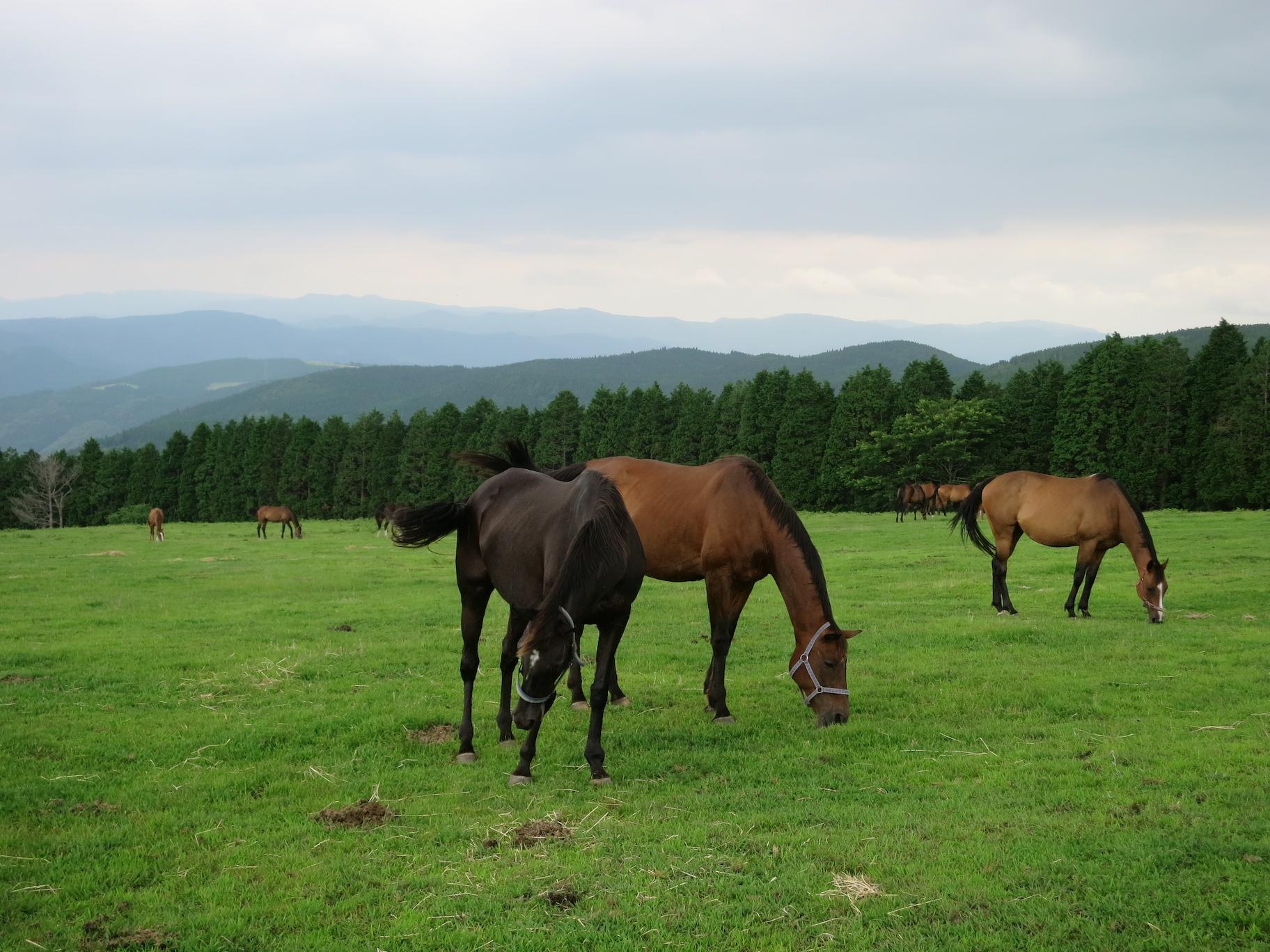 放牧場の馬たち